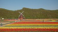 Kebun bunga Hokkaido, Jepang