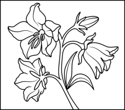 Bellflower Coloring Page. Printables. Apps for Kids.