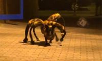 Why Wait For Halloween? Arachnophobes, Beware Of The