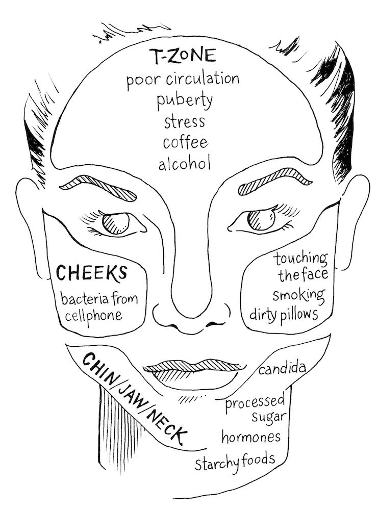 face skin medical terminology diagrams