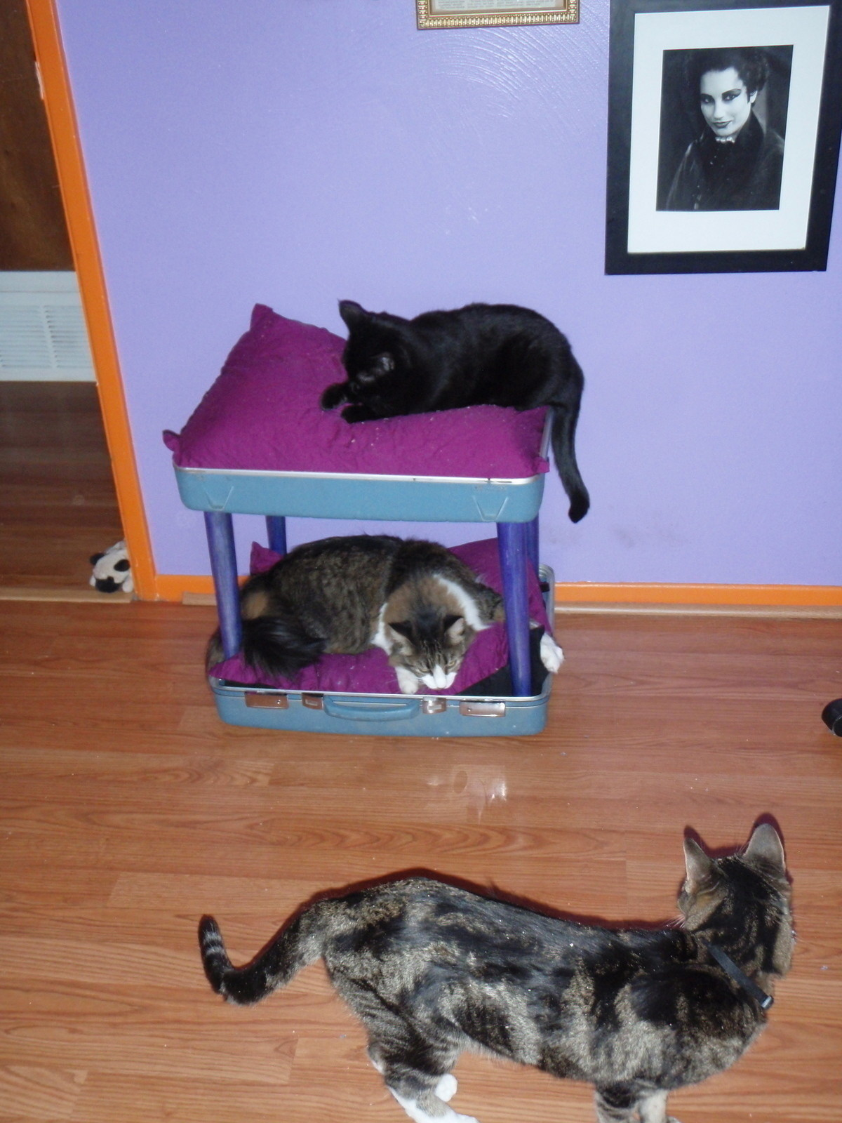Reclaimed Suitcase Amp Chair Cat Bunkbed 183 How To Make A Pet