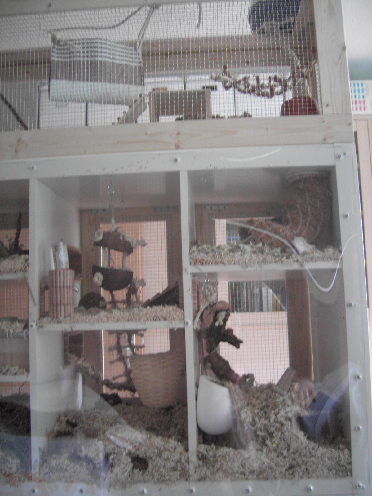 My Mouse Cage An Aquarium Tank Construction