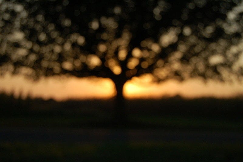 Out Of Focus Photography On Purpose  How To Take A