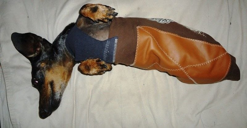 Stylish Wiener Dog Drag Bag  A Dog Outfit  Sewing on Cut