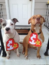 Beanie Baby Pet Costumes  A Costume  Other on Cut Out ...
