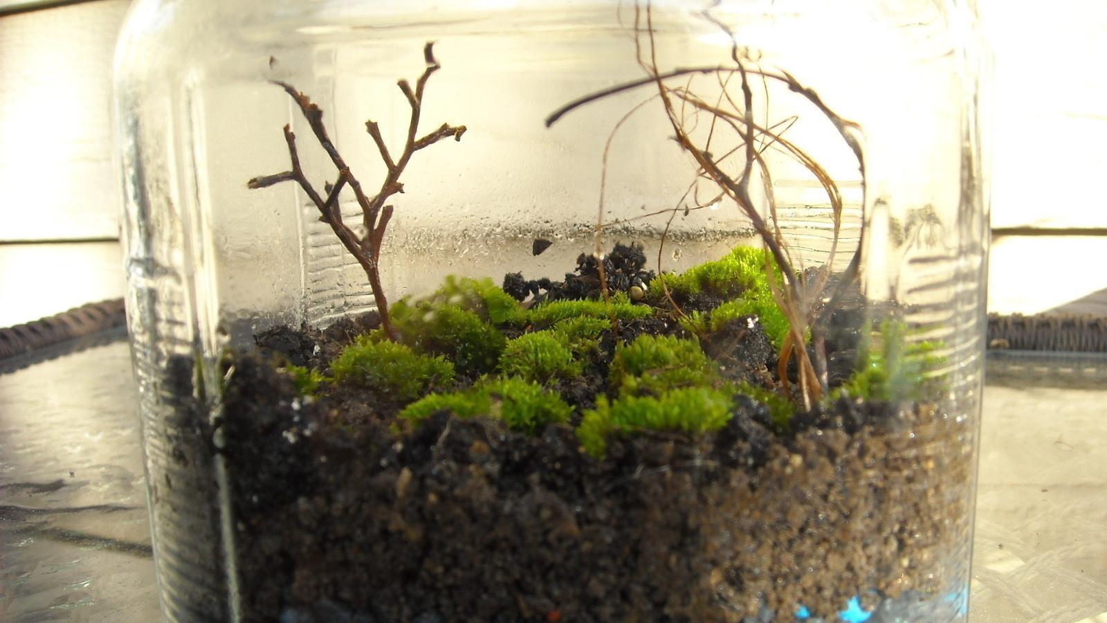Moss Terrarium  How To Make A Terrarium  Gardening on