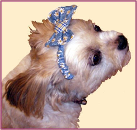 Buttons  Bows Dog Headband  How To Make Pet Clothes