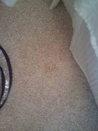 How To Get Stains Out Of Carpet  How To Make A Techniques ...