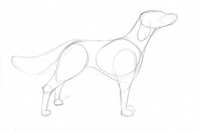 Draw A Dog In 15 Minutes How To Draw An Animal Drawing Art On Cut Out Keep