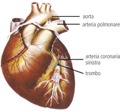 MIOCARDIO  Dizionario medico  Corriereit
