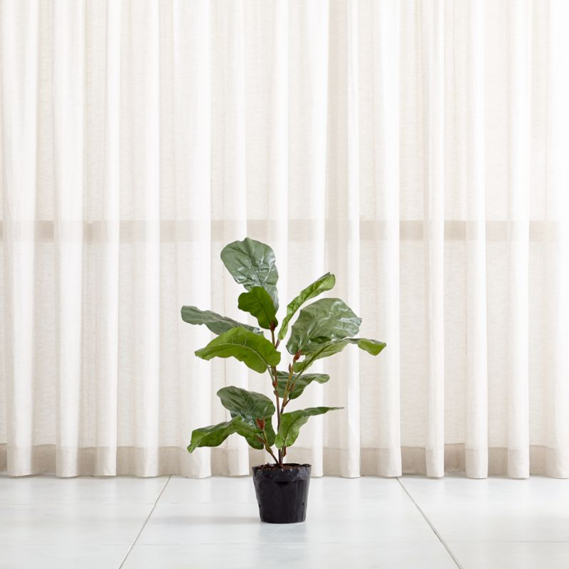 Faux 35 Fiddle Leaf Fig Tree Reviews Crate And Barrel