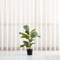 Faux Leather Sofas And Chairs Corner Sofa Furniture Cover 3.5' Fiddle Leaf Fig Tree + Reviews | Crate Barrel