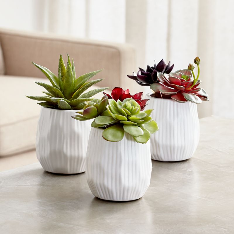 Potted Faux Succulent Plants  Crate and Barrel