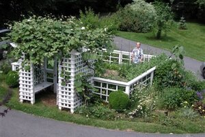 10 Steps To Success With Your First Vegetable Garden