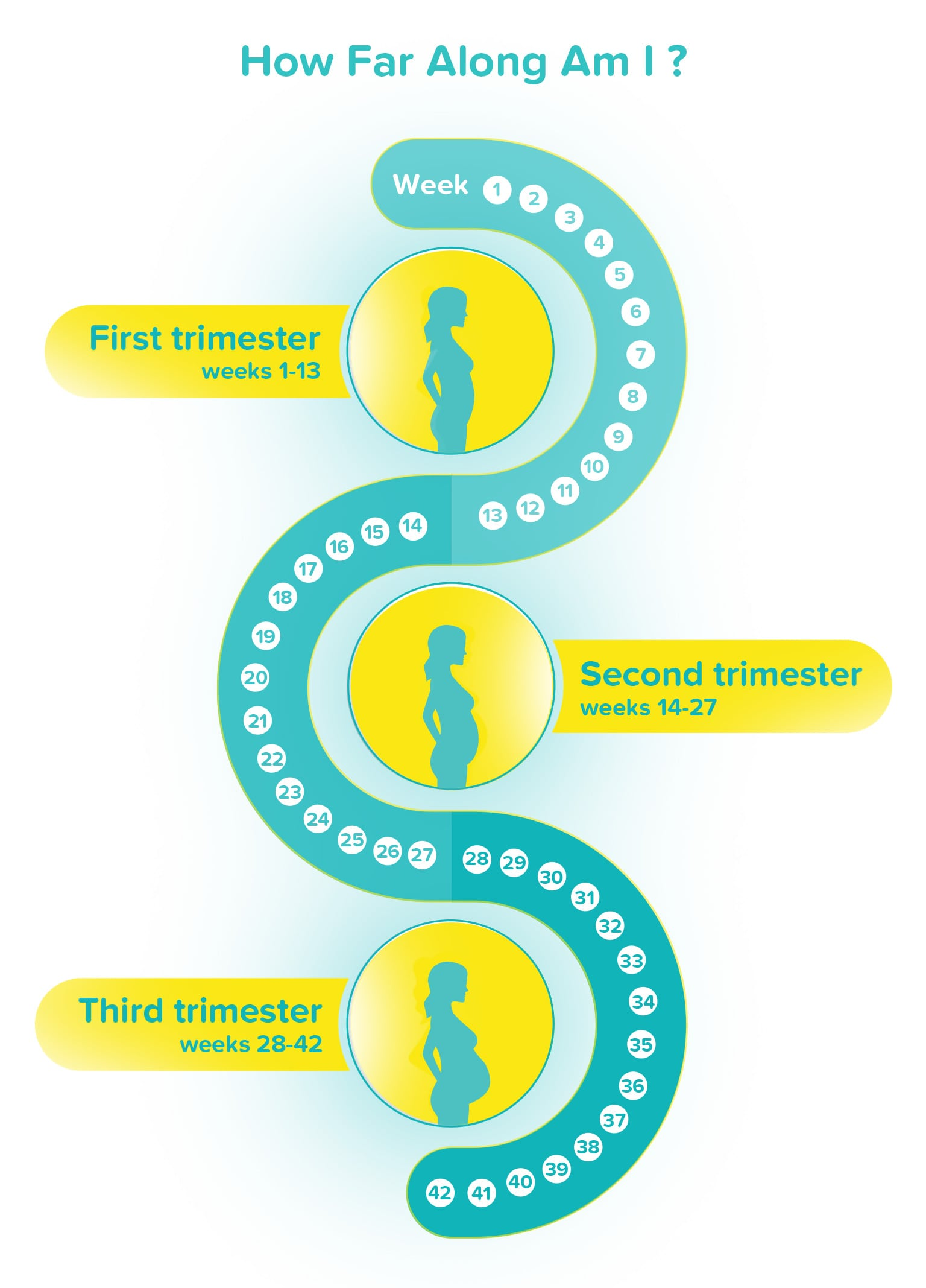 How Many Weeks Is 3 Months : weeks, months, Along, Pregnancy?, Pampers