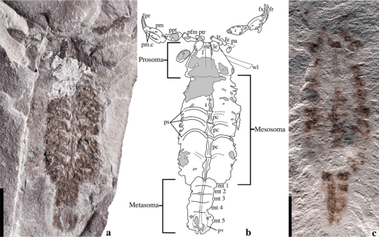 Oldest Known Scorpion May Have Been First To Explore Land
