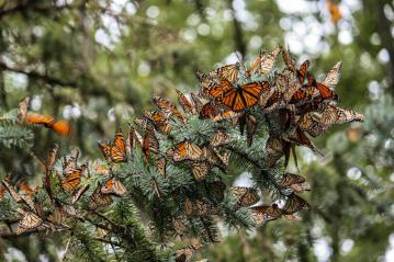 3 Ways to Help Save Monarch Butterflies and Other Pollinators