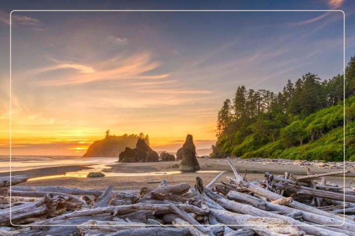 the sun sets at a beach piled with driftwood at Olympic National Park, a dog-friendly national park where one can go hiking with dogs