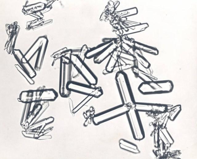 Glucose-1-phosphate crystals taken by Gerty Cori & Carl Cori