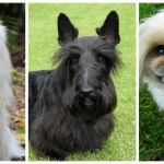 59 Best Small Dog Breeds That Stay Small And Look Cute Forever Littlethings Com