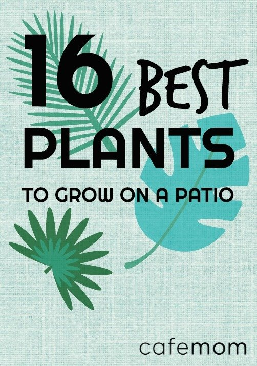 16 plants that are easy to grow on the