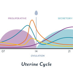 the uterine cycle [ 2400 x 1200 Pixel ]