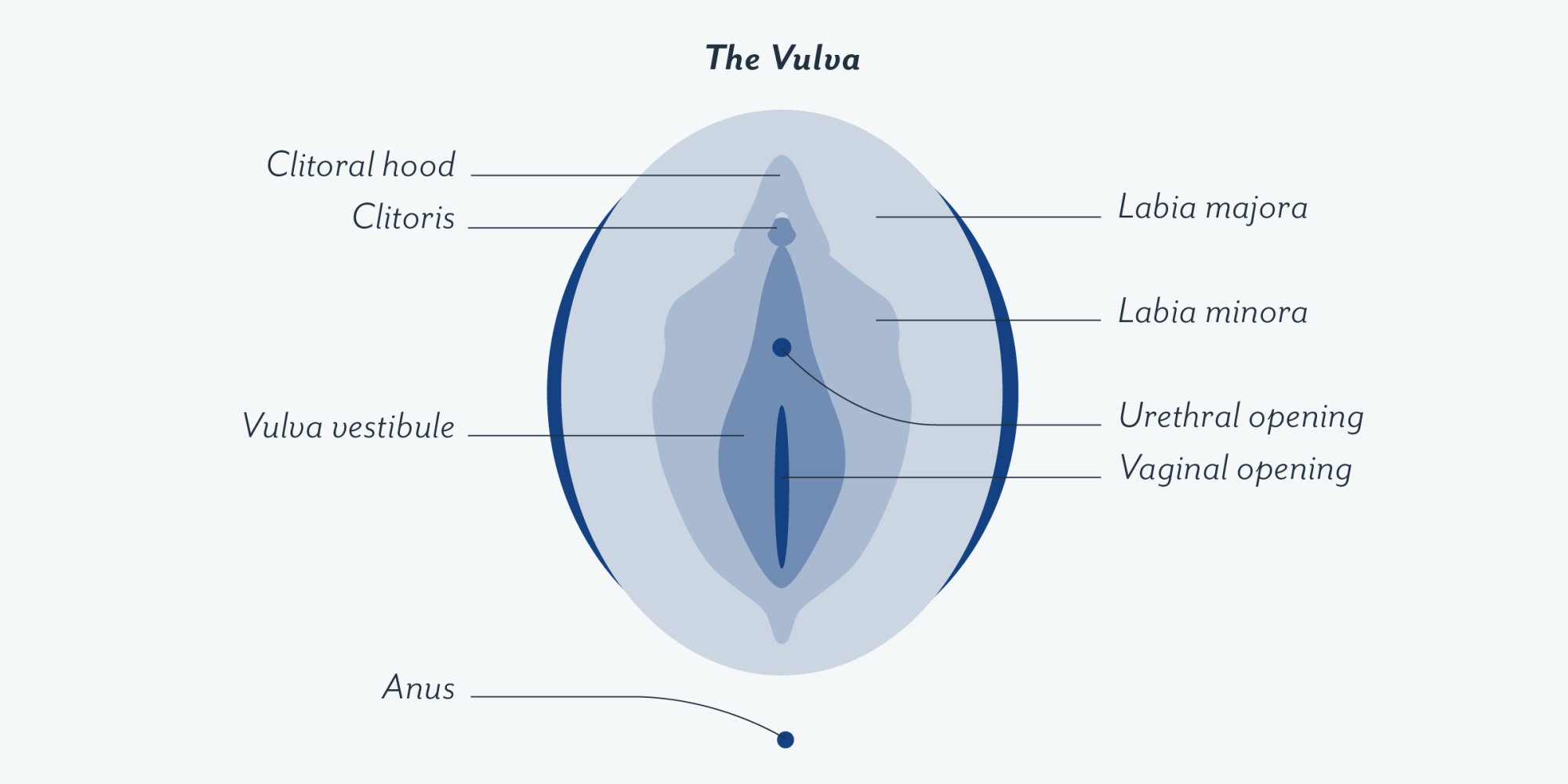 hight resolution of this includes the glans clitoris labia minora and majora opening of the urethra and vagina the introitus and the surrounding tissue
