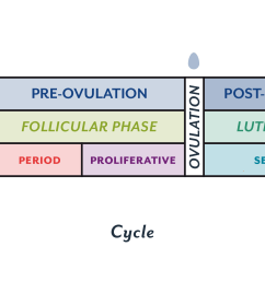 an overview of the menstrual cycle [ 2401 x 1200 Pixel ]