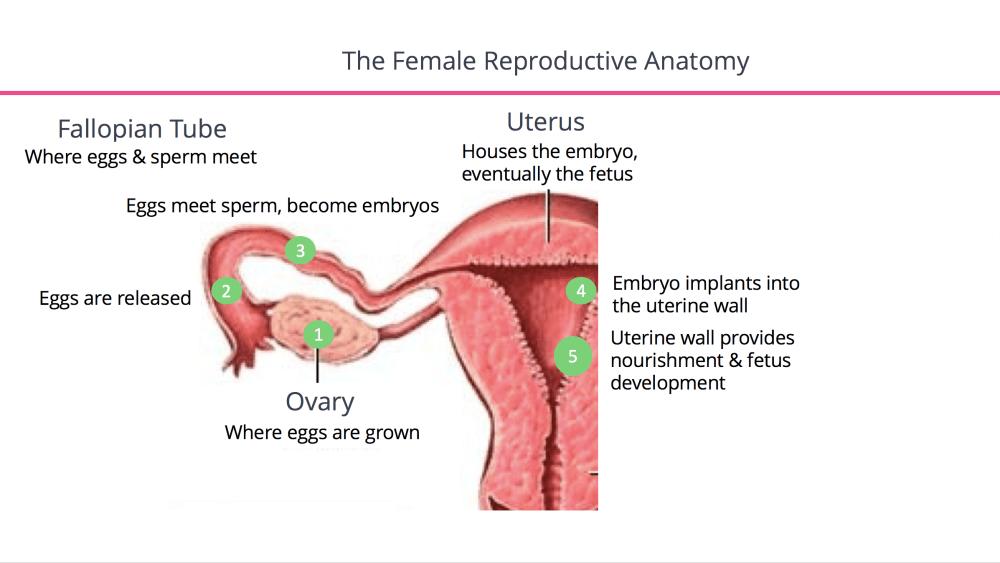 medium resolution of what is endometriosis