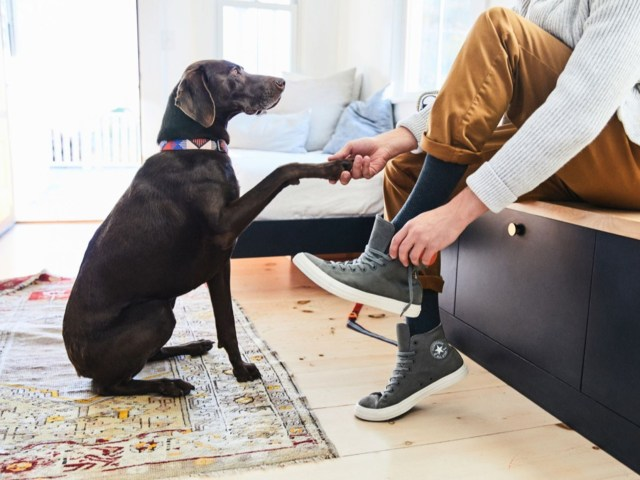 20 Effective Steps for Getting Dog Poop Out of Carpet