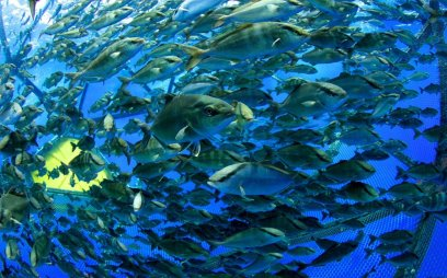 The first investment fund for sustainable fish farming | Virgin
