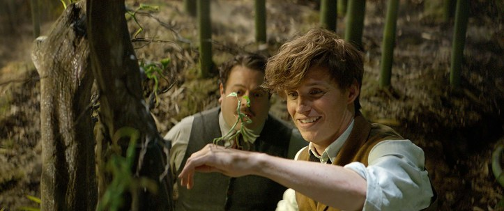 Why Newt Scamander and Harry Potter were different kinds of Chosen One 8