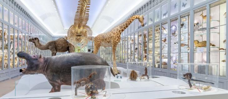 Buenas noticias: reapertura del Museo de Historia Natural de Burdeos