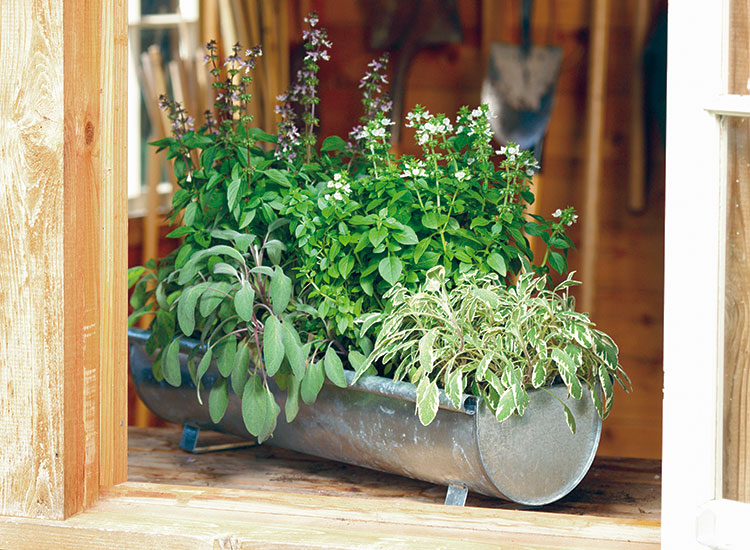 Ideas For Growing Herbs In Pots Garden Gate