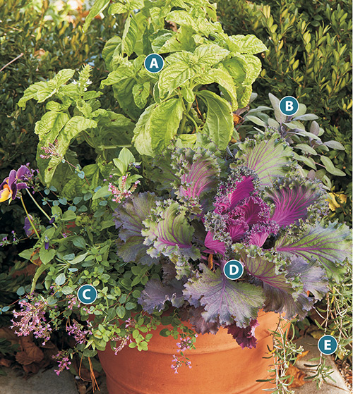 Ideas For Growing Herbs In Pots Garden Gate