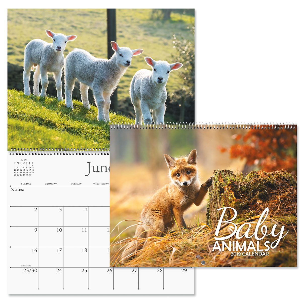 2019 Baby Animals Wall Calendar Current Catalog