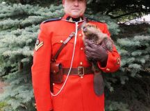 Is this the most Canadian photo ever? | Daily Hive Vancouver