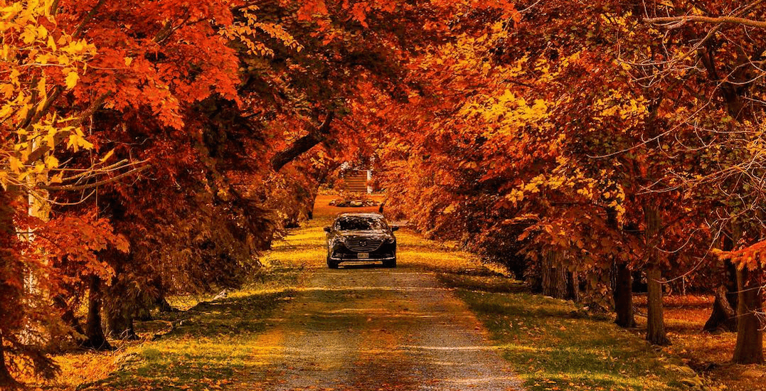 Fall Pumpkin Wallpaper Hd 10 Road Trips To Go On Before Fall Ends In Ontario Etcetera