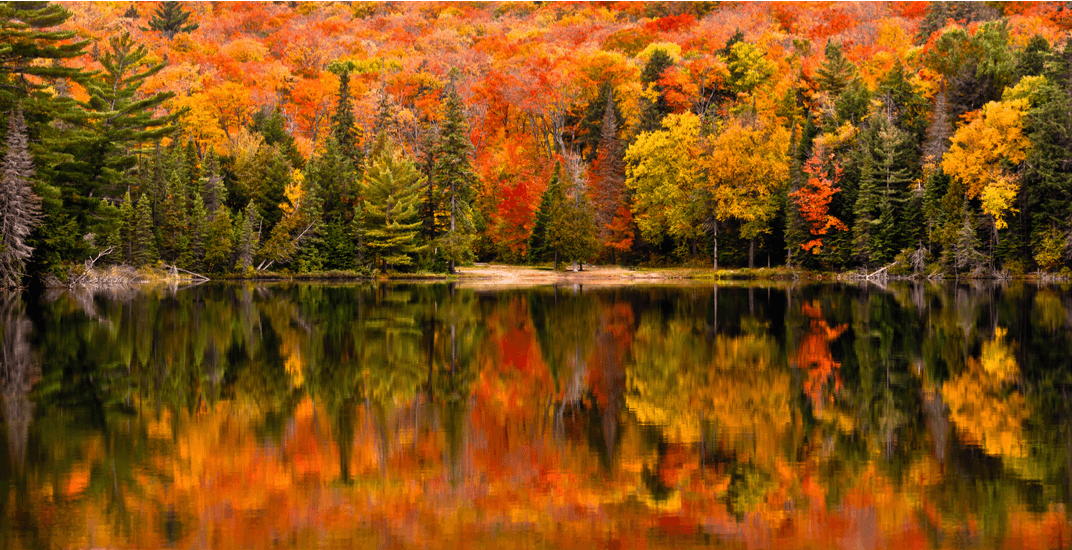 New England Fall Desktop Wallpaper This Fall Foliage Map Shows When And Where The Leaves Will