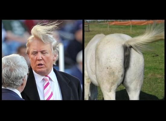Donald-Trump-horse-tail-728x532_1_.jpg