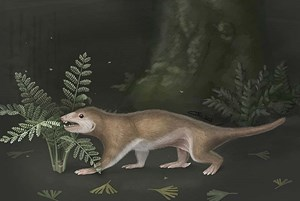"""Megaconus (""""Big hump"""") lived 165 million years ago in what is now China, was ground dwellers and vegetarians."""