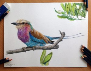pencil drawings drawing bird atomiccircus cool colored deviantart inspirations birds source draw colour amazing dreamcatcher tat colourful animals nature colors
