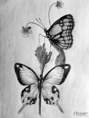 butterfly drawing butterflies pencil sketches simple drawings flowers flower easy nature abstract charcoal coloring eye