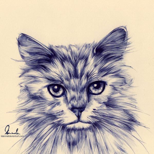Ballpoint Pen Drawing Cat