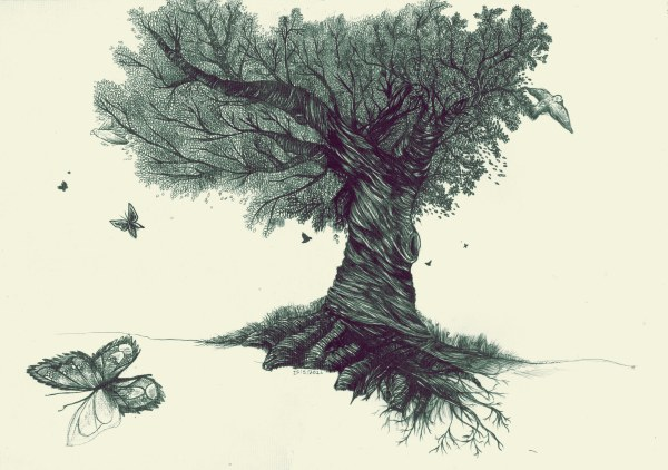 Beautiful Collection Of Tree Drawings Art Ideas