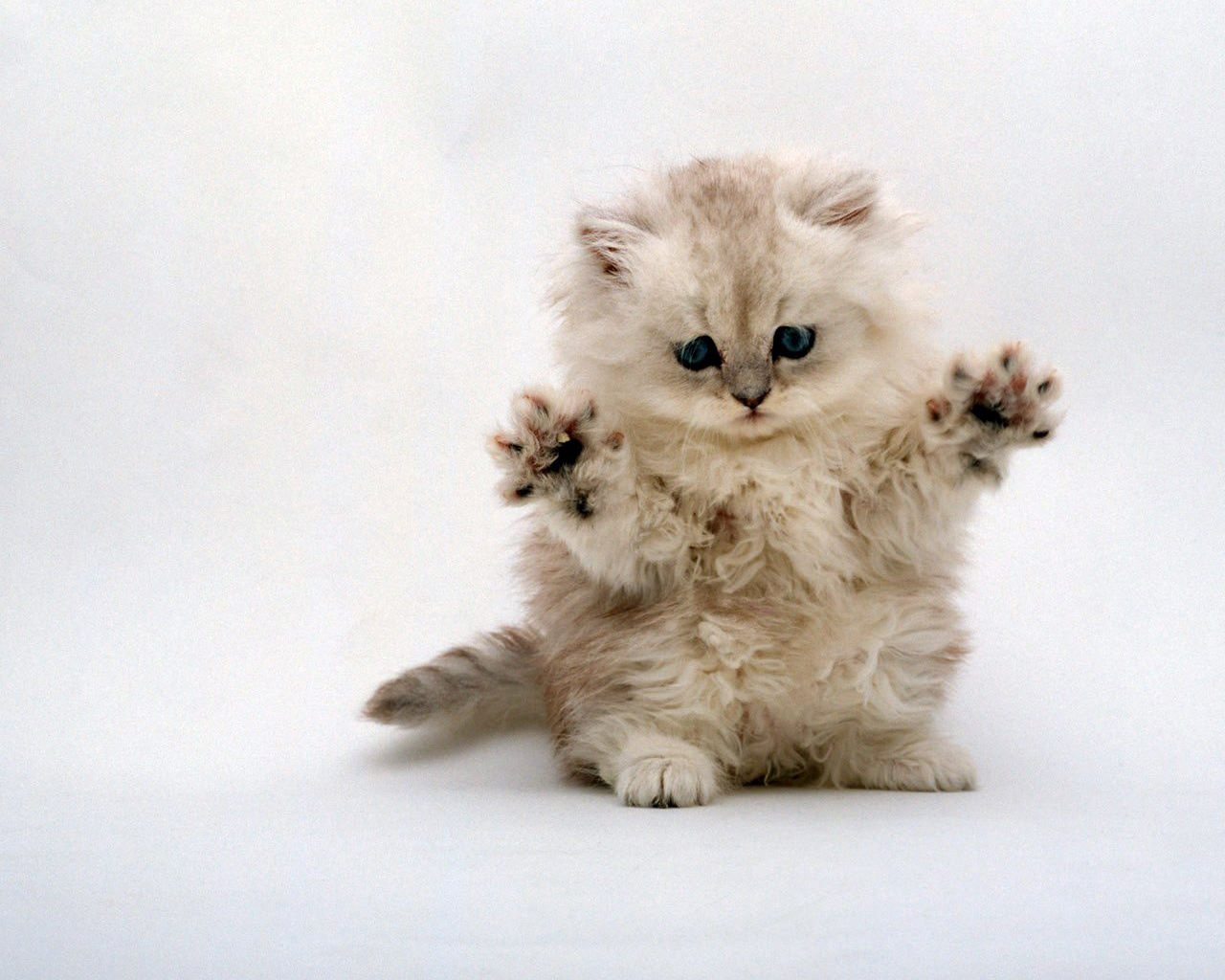 Wallpaper Cute Cats Kittens 29 Cat Backgrounds Wallpapers Images Design Trends