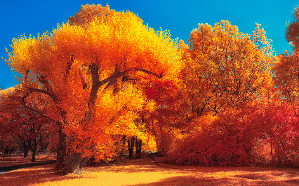 Fall Colored Background Wallpaper 25 Autumn Wallpapers Backgrounds Images Pictures