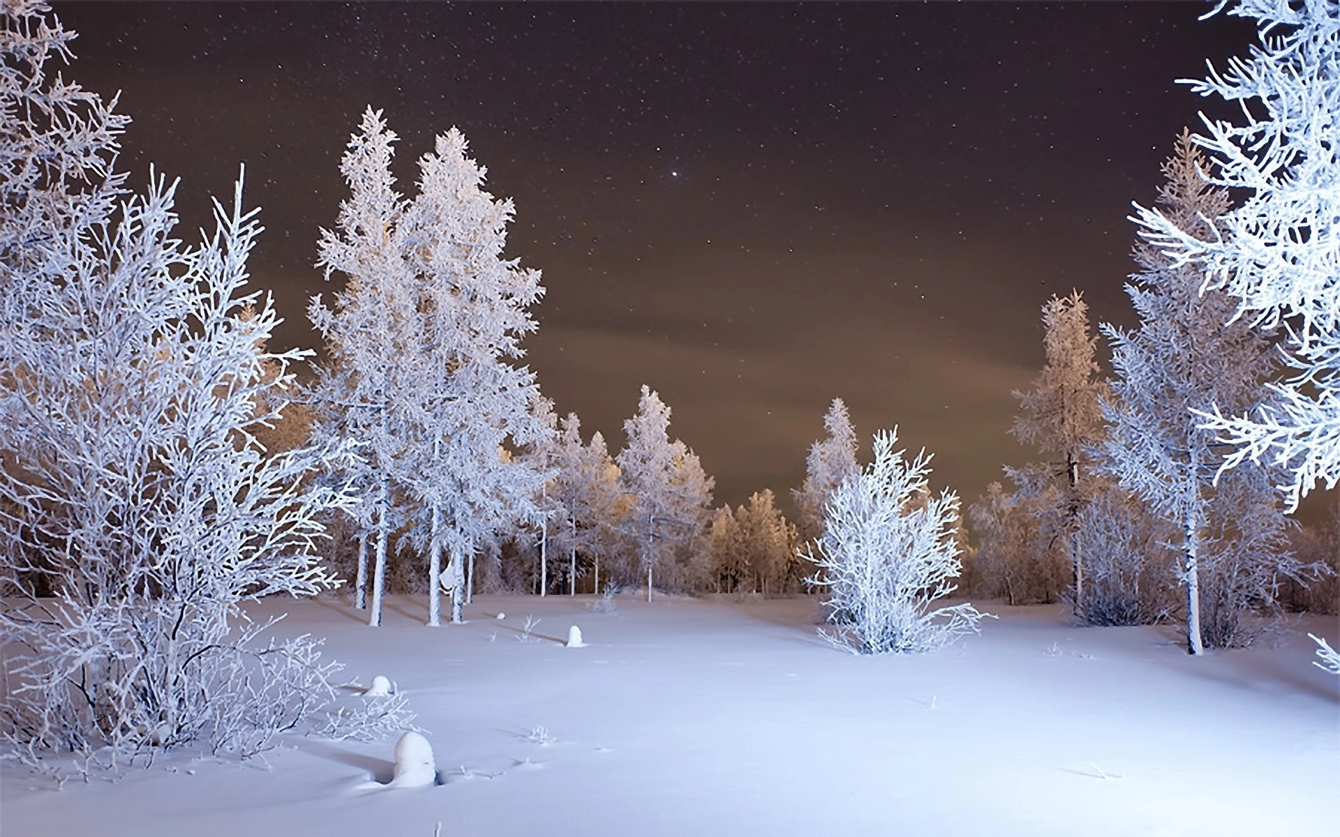 Snow Covered Road Woods