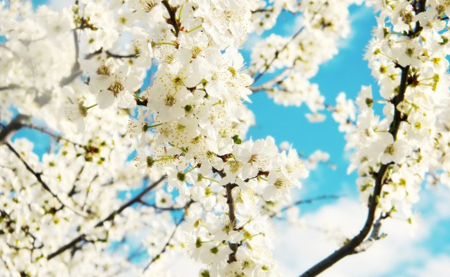 31 Hd Spring Wallpapers Backgrounds Images Design