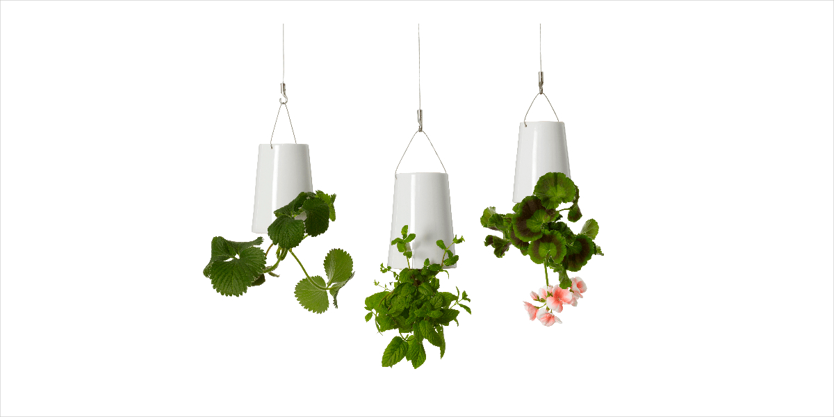 Air Floating Plants